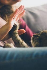 guarda y custodia animales de compañía