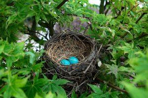 Divortium, casa nido