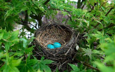 Casa nido ¿Es realmente un buena solución?